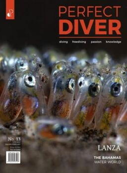 Perfect Diver – January-February 2021